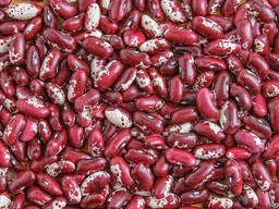 Quality 3D beans from Kyrgyzstan - фото 7