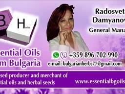 Lavender oil Organic