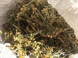 Лекарственные растения (сырье) - photo 2