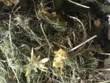 Лекарственные растения (сырье) - photo 7