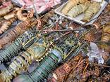 Lobster - photo 1