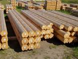 Pine and oak saw timber – any size. Round timber – pine logs - photo 2