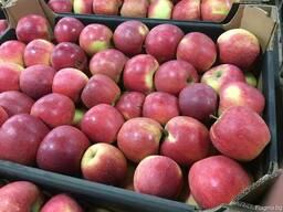 Polish apples, La-Sad - photo 3