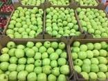 Polish apples, La-Sad - photo 7