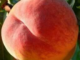 Продам персик
