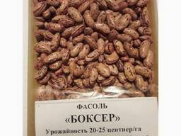 Quality 3D beans from Kyrgyzstan - photo 3