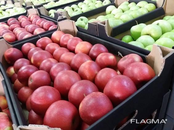 Самые лучшие свежие яблоки из Польши