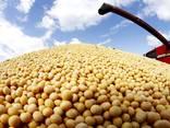 Соя без ГМО - photo 1