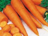 Сушеные овощи и зелень от производителя ! - photo 4