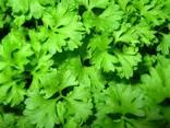 Зелень - фото 1