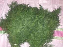 Зелень - фото 2