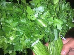 Зелень - фото 4