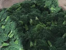 Зелень - фото 7